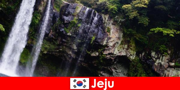 Jeju στη Νότια Κορέα το υποτροπικό ηφαιστειακό νησί με εκπληκτικά δάση για τους αλλοδαπούς