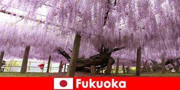 Ταξίδια στη φύση για αγνώστους στην ανέγγιχτη φύση της Φουκουόκα της Ιαπωνίας