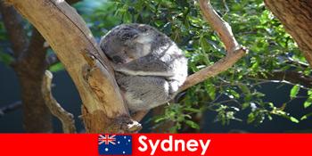 Προορισμός Σίδνεϊ Αυστραλία στον εξωτικό ζωολογικό κήπο με εμπειρία διανυκτέρευσης