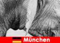 Ειδικό ταξίδι για τους επισκέπτες στον πιο πρωτότυπο ζωολογικό κήπο της Γερμανίας Μόναχο